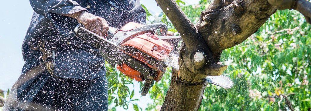 Tree Service Near Marietta